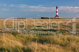 Salzwiesen an der Nordsee, im Hintergrund der Leuchtturm Westerhever