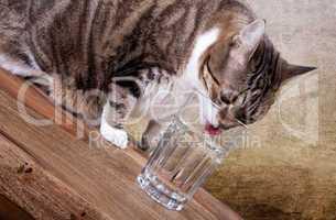 Katze mit Wasserglas auf Tisch
