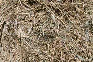 Stroh - Straw