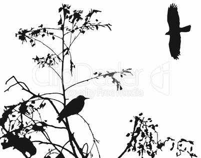 birds -2