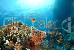 Colourful tropical reef