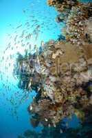 verschiedene Fische Unterwasser