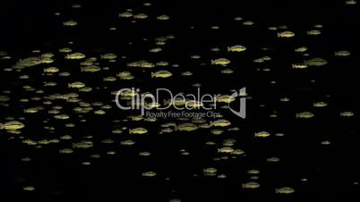 animation of fish.egg,bubble,oxygen,hydrogen,ephemera,plankton,feed,spores,groups,art,mind,Bacteria,microbes,algae,cells,drugs,seafood,salmon,Led,neon lights,modern,stylish,dizziness,romantic,seamless,loop,