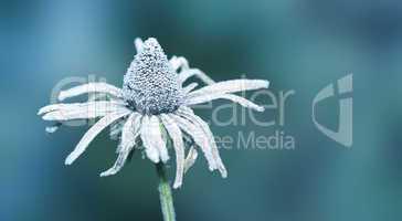 flower on ice