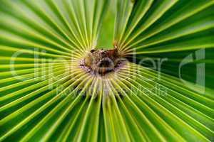 Strukturen und Linien von einem Pflanzenblatt einer Palme
