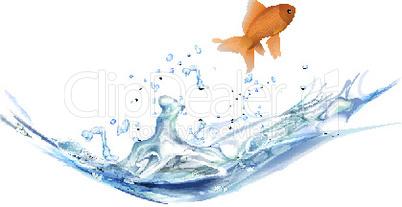 gold fish juming