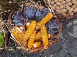 Maiskolben und Rotkraut