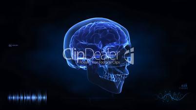 Inside human head