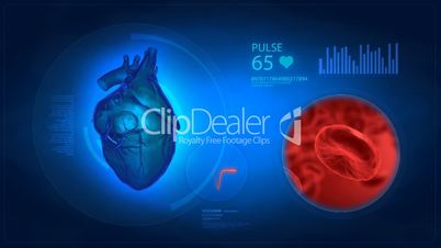 Human heart medical display with blood window