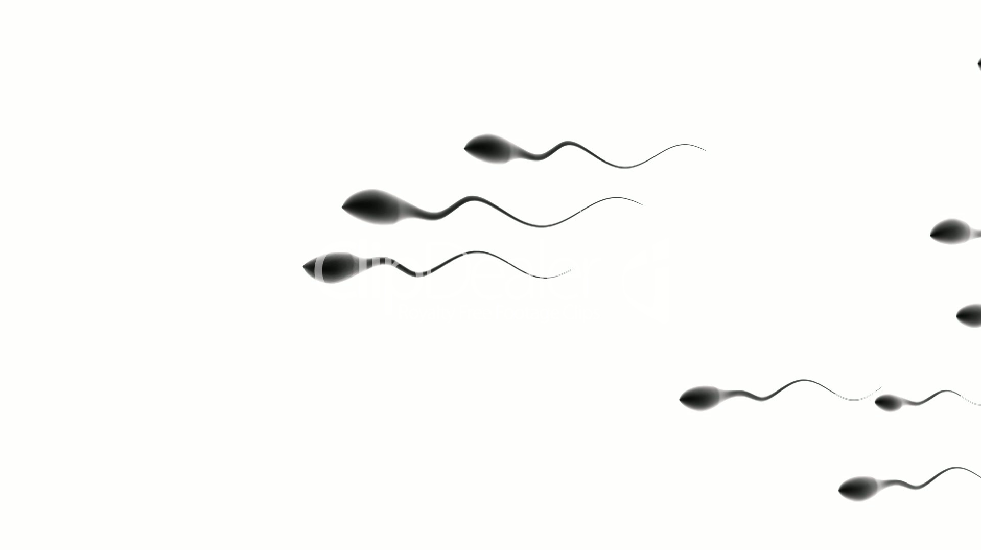Caucasian sperm competition