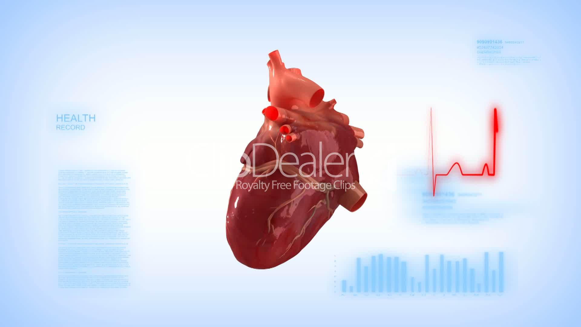 Human Heart Monitor Concept Royalty Free Video And Stock Footage