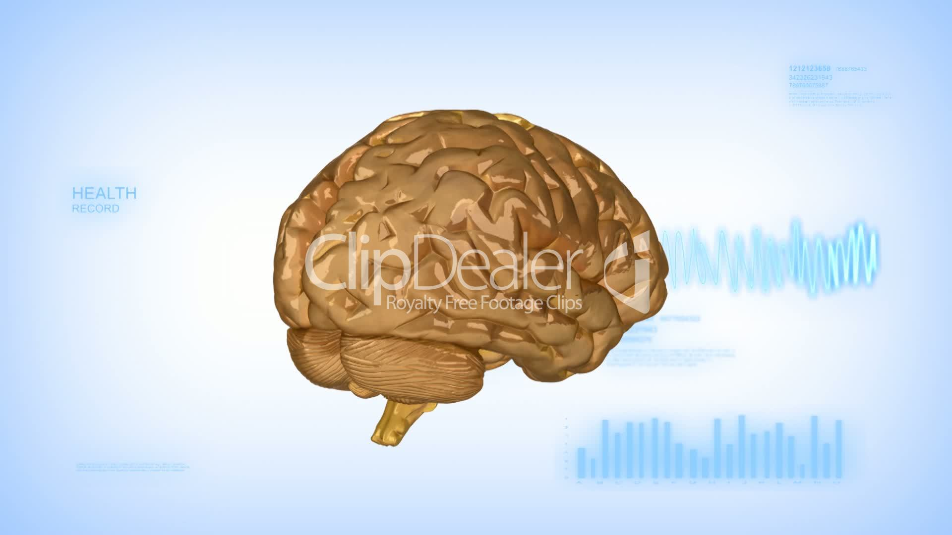 Human brain with EEG diagram with alpha in loop: Royalty-free video ...