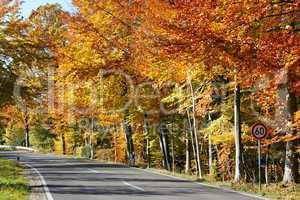 Strasse im Herbst - Street in Autumn