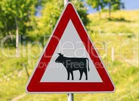 Schild Vorsicht Kühe - traffic sign cows