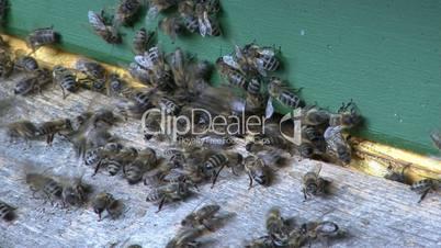 Bienenstock Detail 02