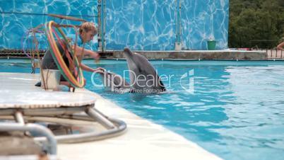 Feeding Dolphins