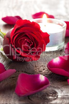 Rose und Blütenblätter / rose and petals