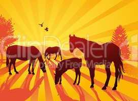 Horse under the sunlight