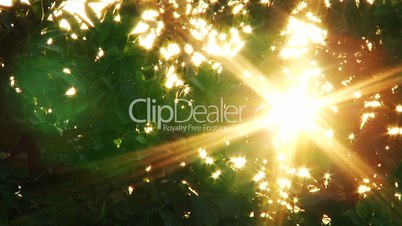Rays of light through the leaves