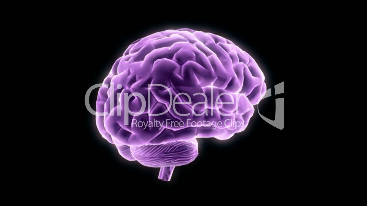 Brain Animation Royalty Free Video And Stock Footage