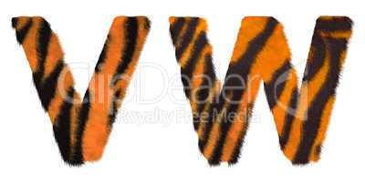 Tiger fell W and V letters isolated