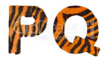 Tiger fell P and Q letters isolated