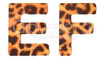 Leopard fur E and F letters isolated