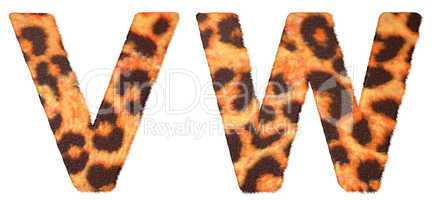Leopard fur V and W letters isolated