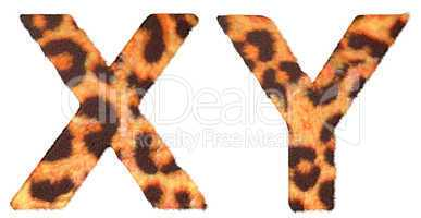 Leopard fur X and Y letters isolated