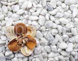 Wellness Flower on white Stones - Inspiration Concept