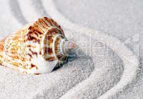 Muschel auf Sand - Wellness Concept