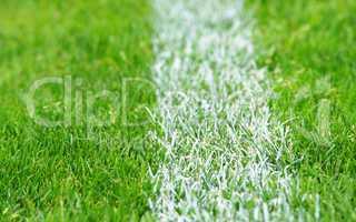 fußball rasen - soccer grass