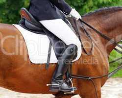 Reitsport Detail - Horse Woman