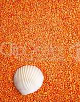 Orange Wellness - Concept