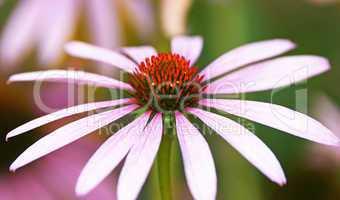 Blüte Nahaufnahme - Flower Close-up