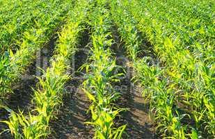 Ackerbau - Landwirtschaft - Farmland