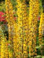 Blütenpracht im Garten - Yellow Flowers