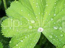Der Regentag - Concept - Rainy Day