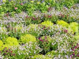 Der Sommer Garten - Summer in the Garden