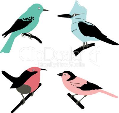 Illustration von Vögeln