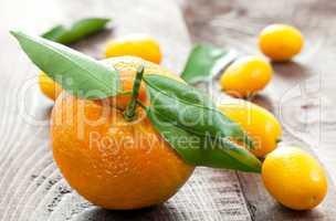 Mandarine und Kumquats / tangerine and kumquats