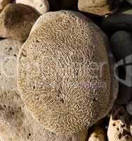 Rippled rock looking like brain