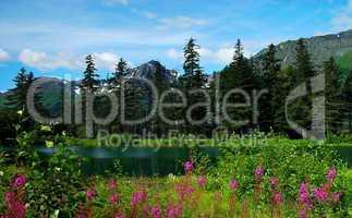 Sommer in Alaska
