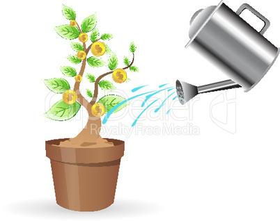 Baum und Gießkanne