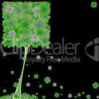 clover tree