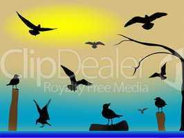 birds paradise