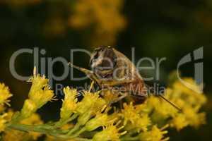 Fliege / Fly