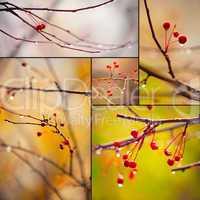 autumn branches under rain
