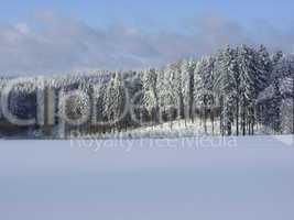 wald und wiese im schnee