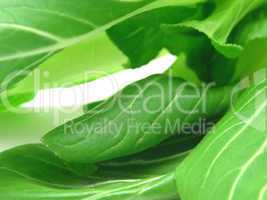 Pak Soi Blätter als Hintergrundbild